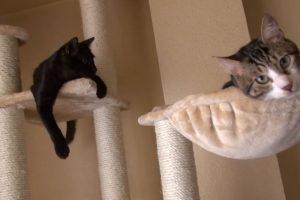 Mejores Árboles Rascadores para Gatos